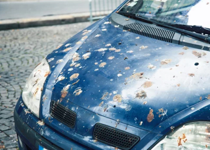 Bird droppings on front of car